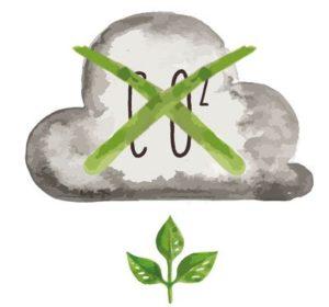 CO2 Neutrale Urnen Herstellung